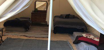 Welsummer camping