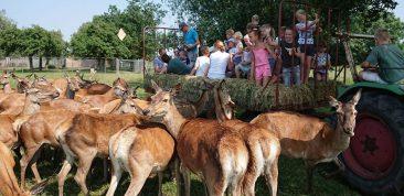 Recreatie & Hertenboerderij de Weerd